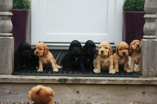 かわい過ぎる子犬の画像の数々!の画像(18枚目)
