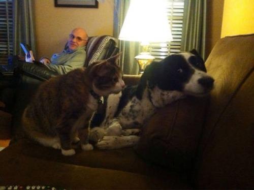 猫と犬の力関係の画像(23枚目)