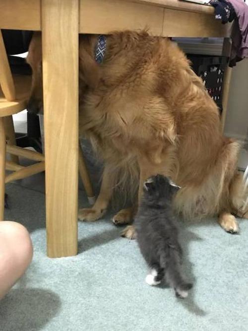 猫と犬の力関係の画像(35枚目)