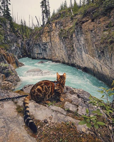 美しい風景と猫の画像(10枚目)