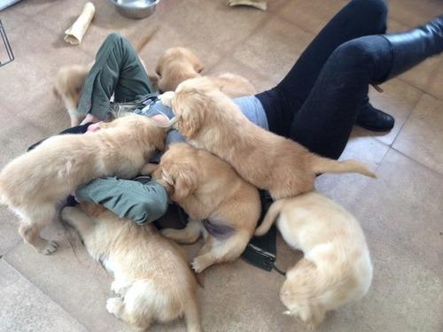 かわい過ぎる子犬の画像の数々!の画像(73枚目)