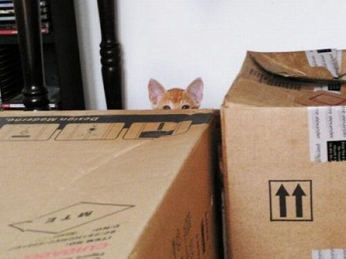 獲物を狙うかわいいネコの画像(4枚目)