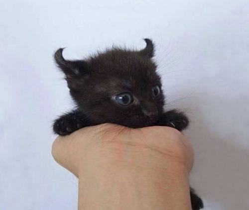 kittens_38