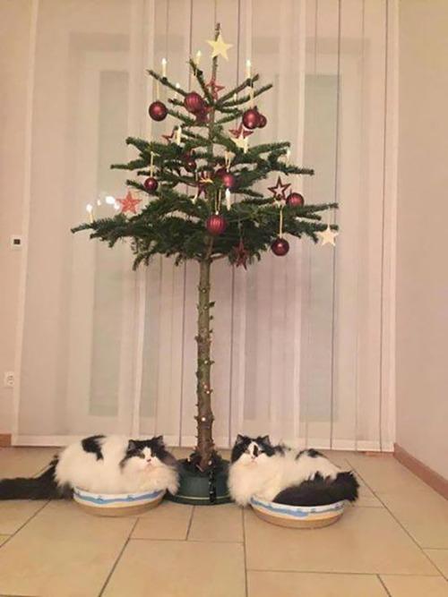 ペットと過ごすクリスマスの画像(24枚目)