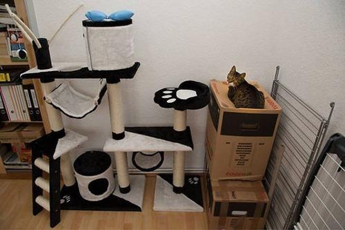 にゃんとも言えない、ちょっと困った猫の画像の数々!!の画像(15枚目)