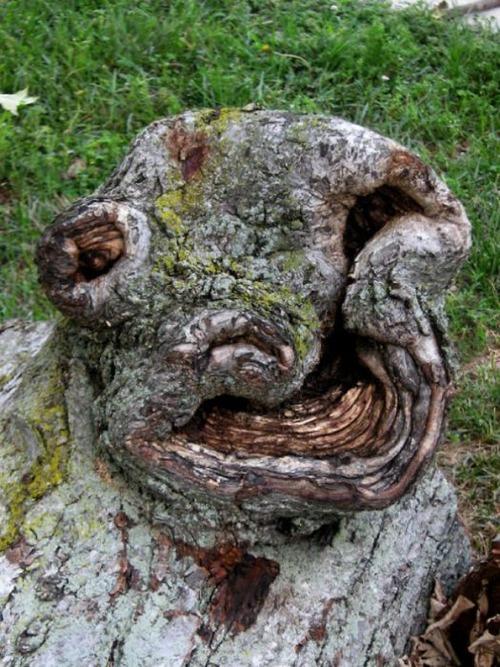 不気味な形の樹木の画像(14枚目)