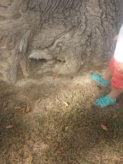 不気味な形の樹木の画像(6枚目)