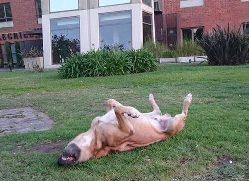 スチュワーデスさんに拾われた犬の画像(6枚目)