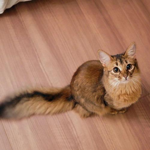 かわい過ぎる猫ちゃんの画像(2枚目)