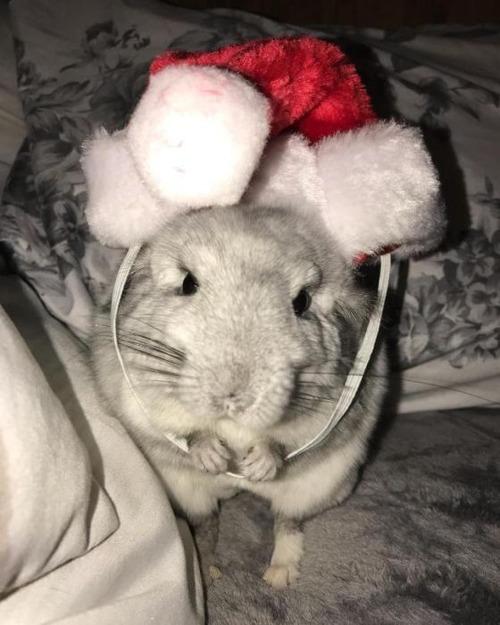 クリスマスのコスプレをした動物達の画像(25枚目)