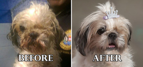 捨て犬の毛をキレイにカットしてるビフォーアフターの画像の数々!!の画像(14枚目)