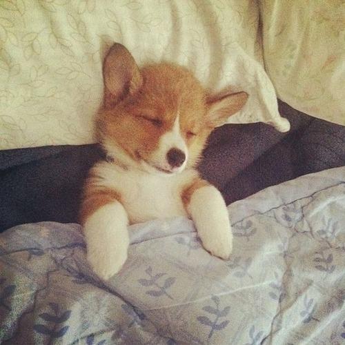 可愛く眠っている動物達の画像(2枚目)