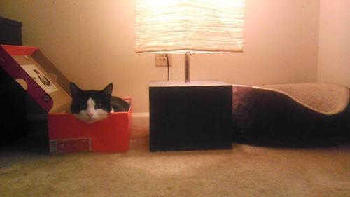 にゃんとも言えない、ちょっと困った猫の画像の数々!!の画像(17枚目)