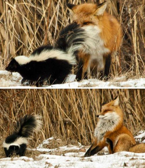 動物たちの面白いの画像(40枚目)