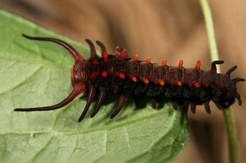怪しすぎる見た目の昆虫の画像(33枚目)