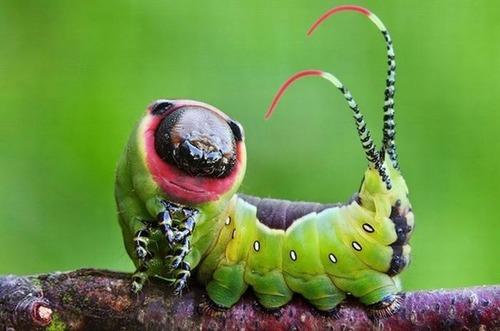 怪しすぎる見た目の昆虫の画像(27枚目)