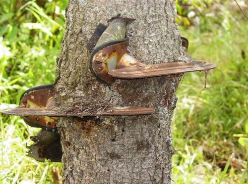 生えている樹木の画像(25枚目)
