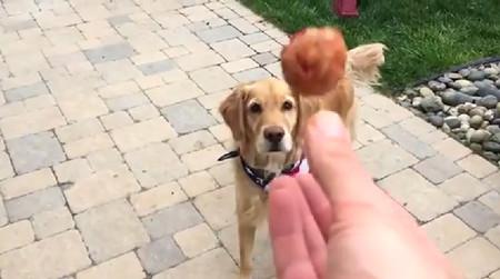食物をなげて口でキャッチできない犬がひたすら悲しい5