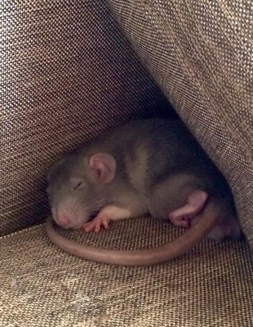 可愛く眠っている動物達の画像(15枚目)
