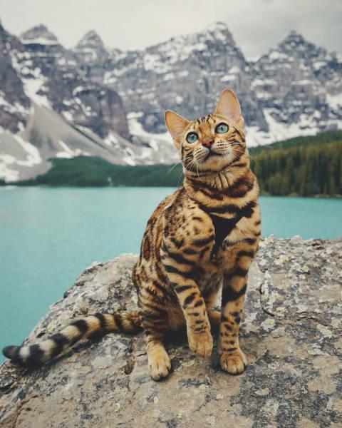 美しい風景と猫の画像(14枚目)