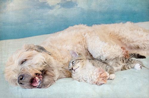ほのぼのする!仲の良い犬と猫の画像の数々!!の画像(24枚目)