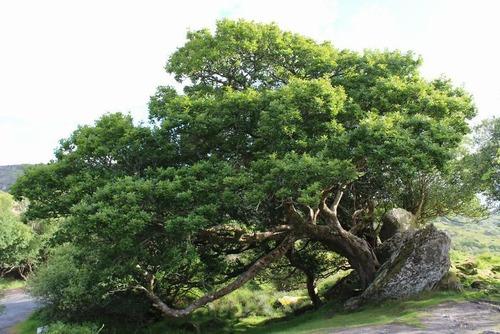 生えている樹木の画像(20枚目)