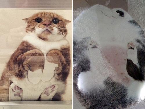 器に入った猫の画像(11枚目)