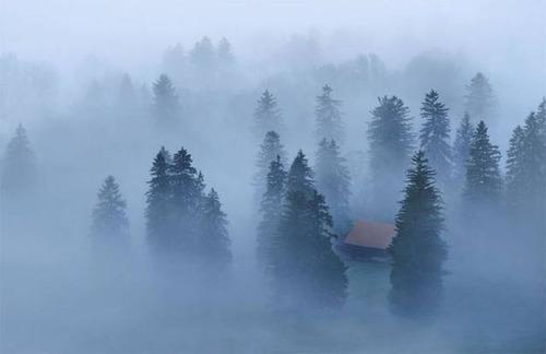 森の中の隠れ家の画像(3枚目)