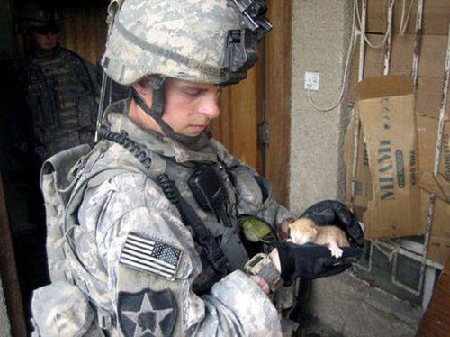 戦場にもネコは居る!!極限状態でも癒される戦場のネコの画像の数々!!の画像(17枚目)