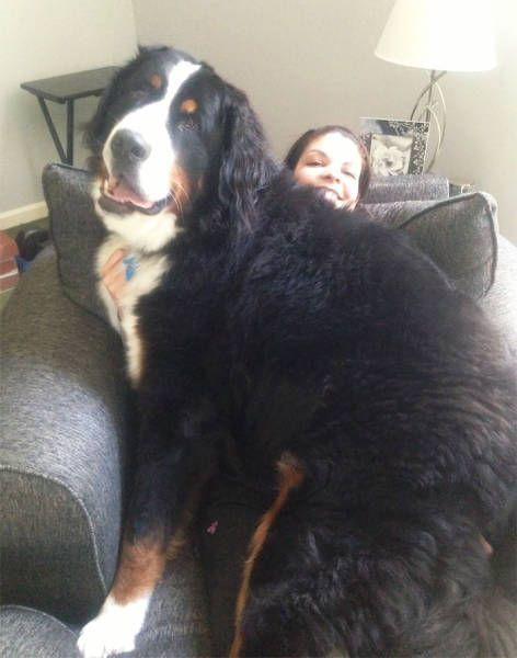 巨大な犬の画像(31枚目)