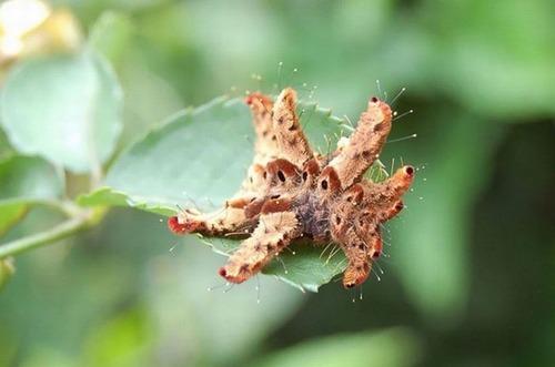 怪しすぎる見た目の昆虫の画像(17枚目)