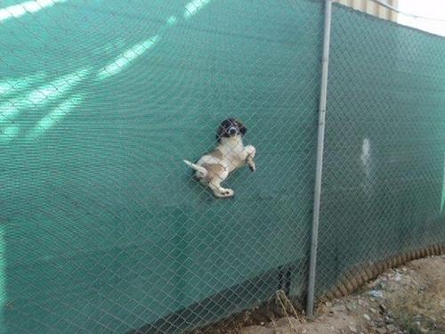 犬はバカ可愛い!!バカだけど憎めない可愛い犬の画像の数々!!の画像(11枚目)