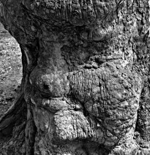 不気味な形の樹木の画像(16枚目)
