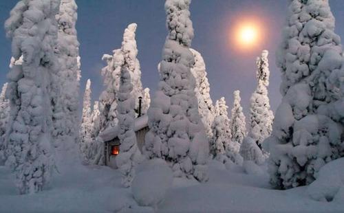森の中の隠れ家の画像(15枚目)