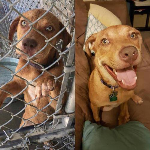 捨犬の時と良い飼主が見つかった時のワンちゃんのほのぼの比較画像の数々!!の画像(21枚目)