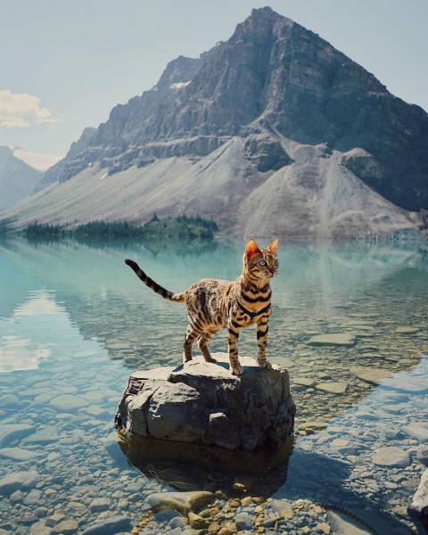 美しい風景と猫の画像(1枚目)