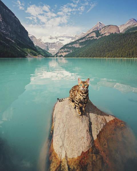 美しい風景と猫の画像(36枚目)