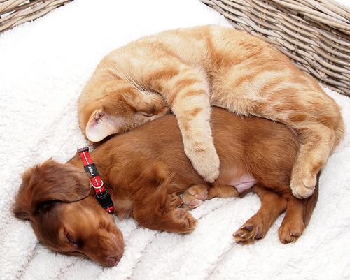 ほのぼのする!仲の良い犬と猫の画像の数々!!の画像(4枚目)