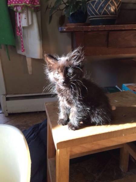神々しい猫の画像(26枚目)