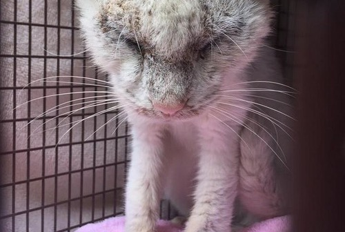目が開かず見えない猫の画像(1枚目)