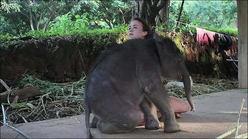 【動画】子供のゾウに懐かれると嬉しい_000004841