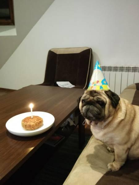 動物達の誕生日の写真の数々!!の画像(7枚目)