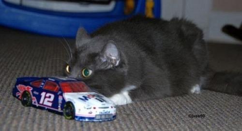 獲物を狙うかわいいネコの画像(8枚目)