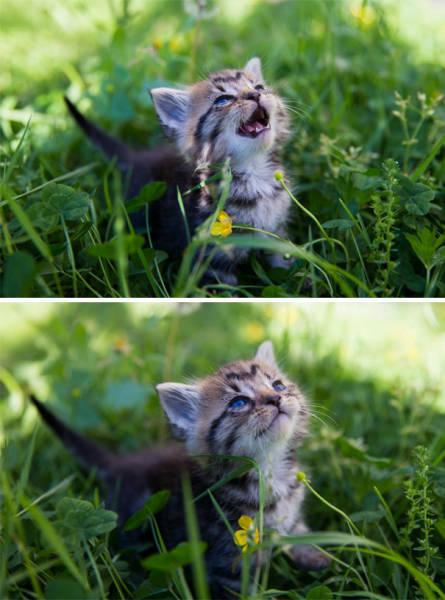 神々しい猫の画像(38枚目)