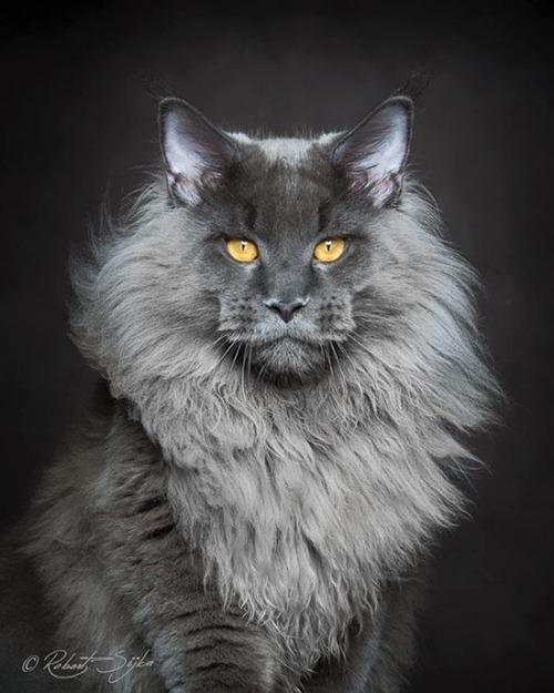 かわい過ぎる猫ちゃんの画像(13枚目)
