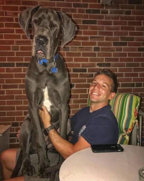 巨大な犬の画像(42枚目)