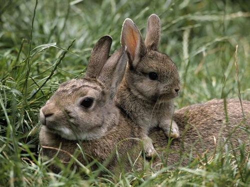 色々な動物の親子の癒される画像の数々!!の画像(15枚目)