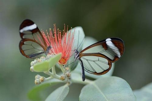 怪しすぎる見た目の昆虫の画像(30枚目)