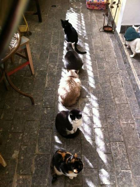 神々しい猫の画像(32枚目)
