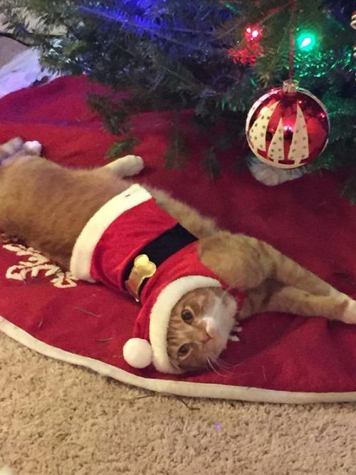 ペットと過ごすクリスマスの画像(6枚目)
